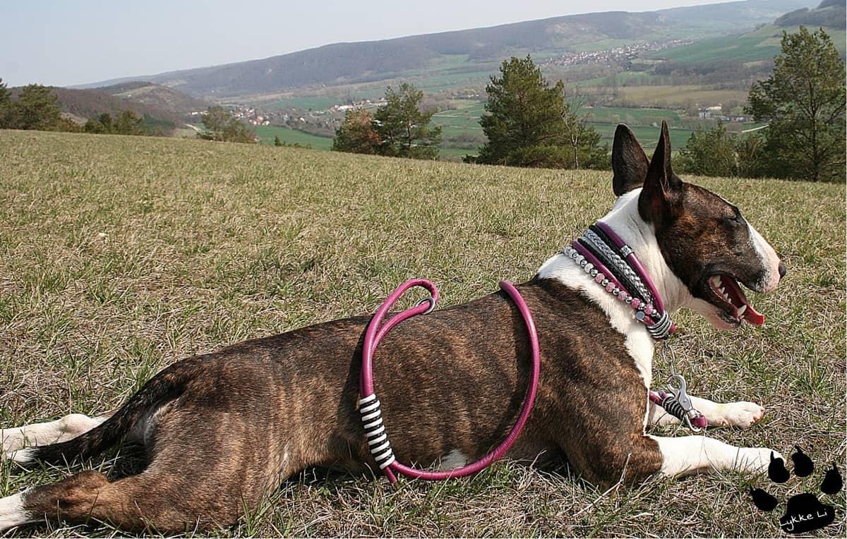 Hundehalsband nach Wunsch mit viel Strass