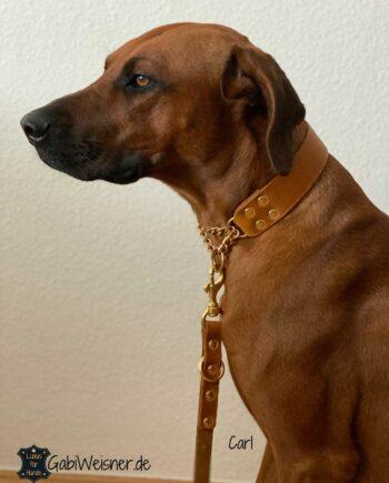 Hundehalsband Zugstopp Leder Rhodesian Ridgeback Carl
