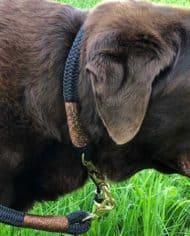 Halsband-und-Leine-für-große-Hunde