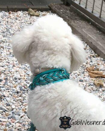 Hundehalsband 4 cm breit Leder in Türkis. Bestückt mit oder ohne Strass.