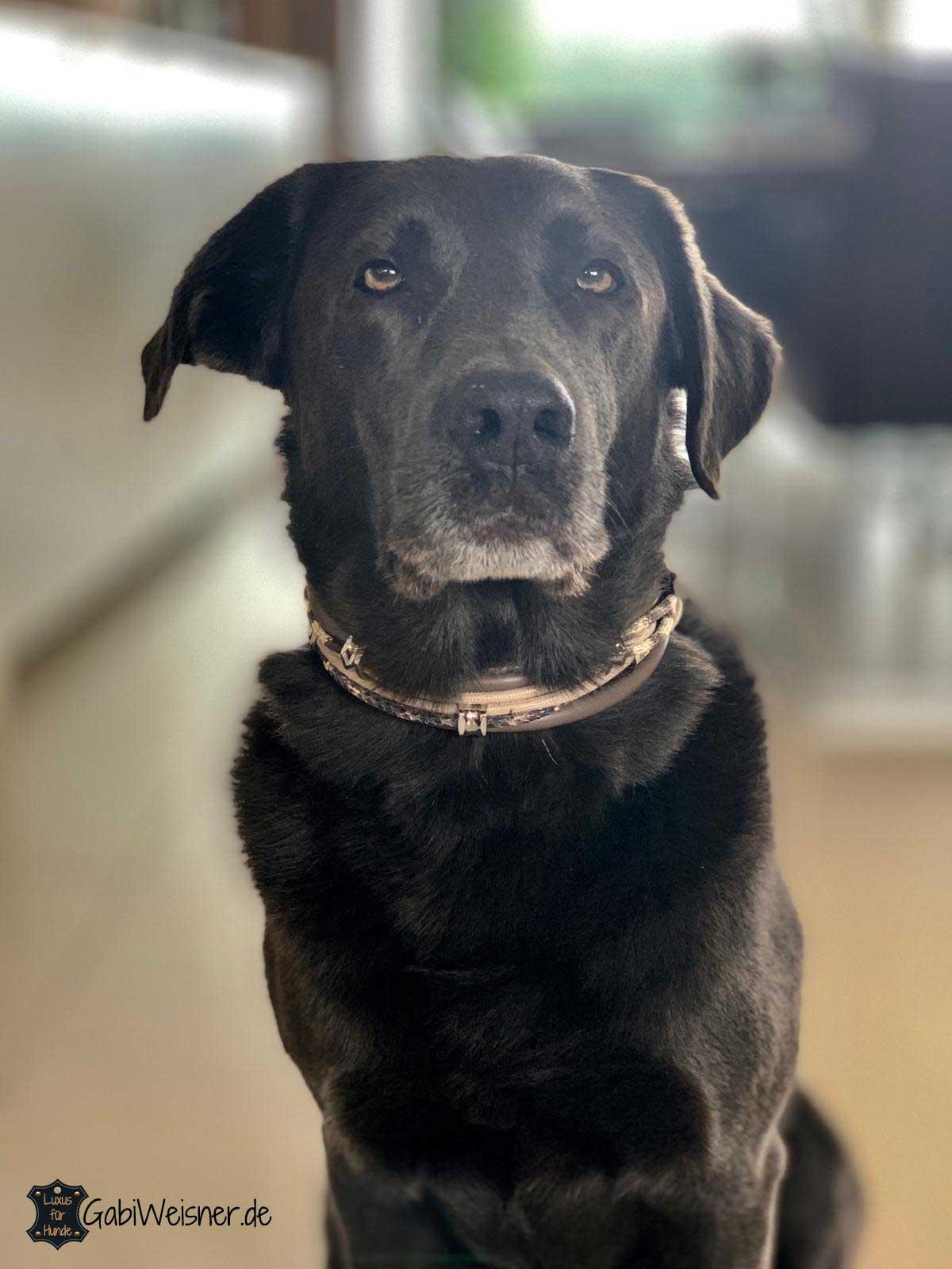 Hundehalsband exklusiv in Taupe mit Schlangen- und Echsenprägung in Beige