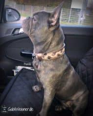 Hundehalsband-Leder-4-cm-breit-Manolo-1