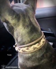 Hundehalsband-Leder-4-cm-breit-Manolo-2