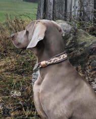 hundehalsband-Taupe-Silva-2