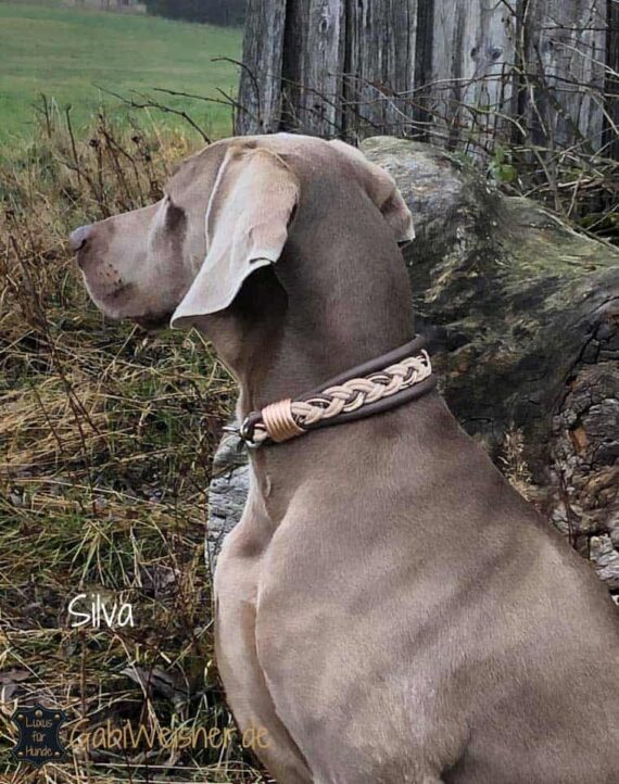 Hundehalsband Leder 4 cm breit Taupe Silva