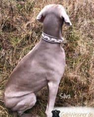hundehalsband-Taupe-Silva-4