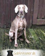 hundehalsband-Taupe-Silva-5