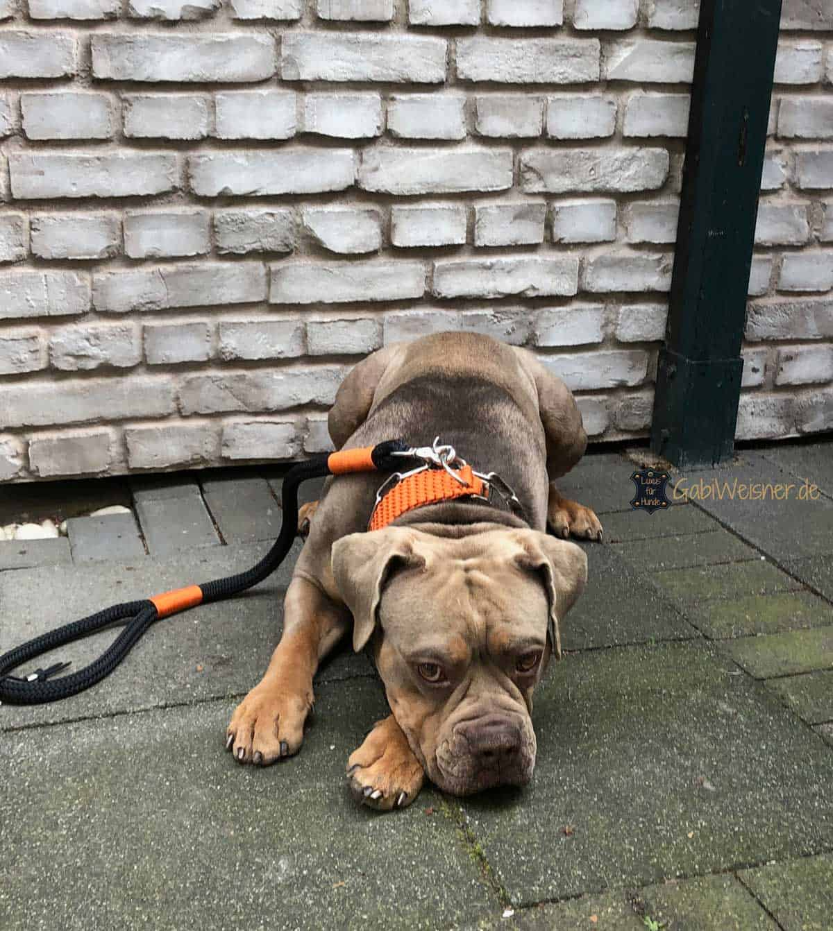 Hundehalsband wasserfest Paracord