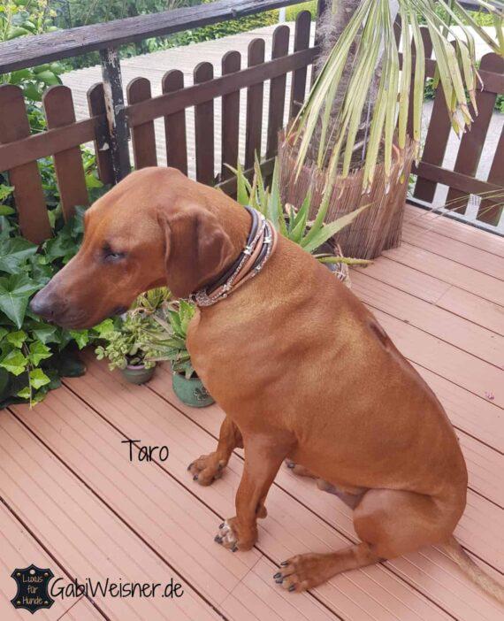 Luxus Hundehalsband 5 cm breit