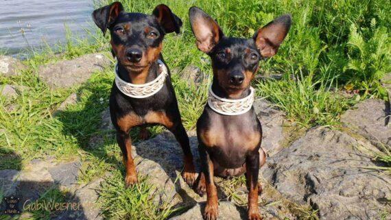 Mini Hundehalsband Nappaleder 3 cm breit, in Perlmutt-, Elfenbein- und Rosegoldfarben