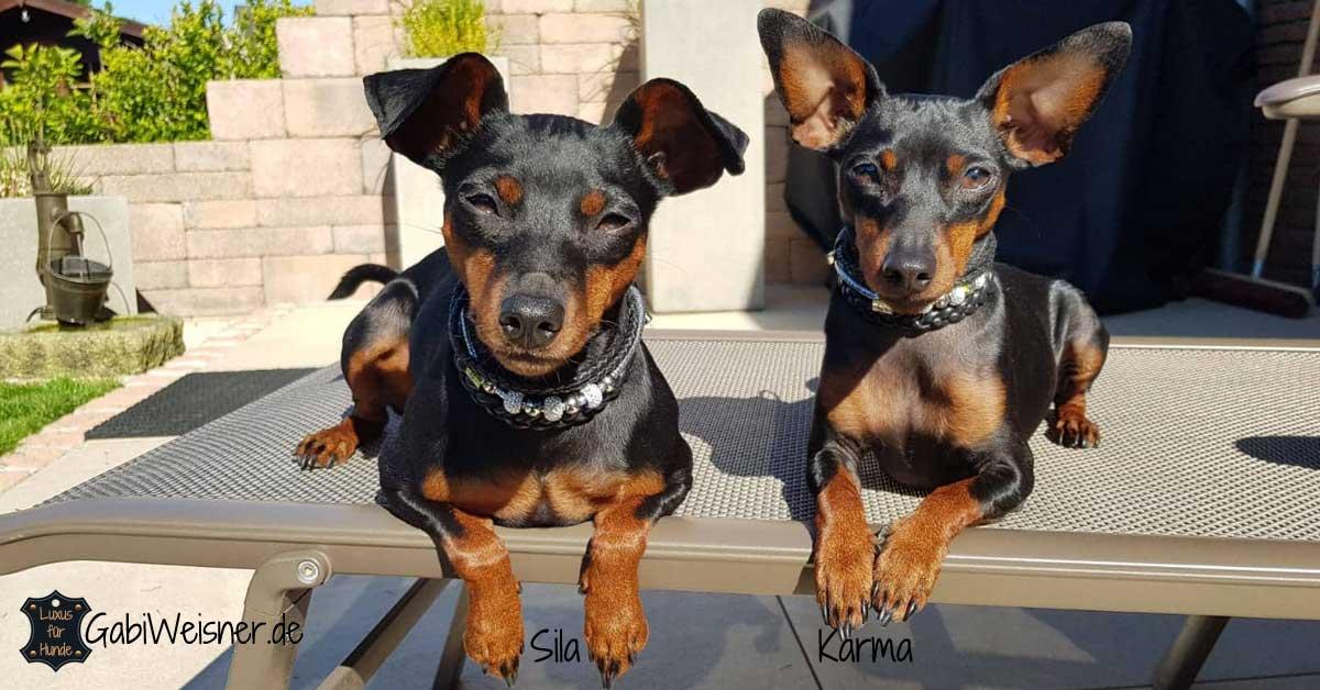 Mini Hundehalsband Leder mit Strass und Edelstahl