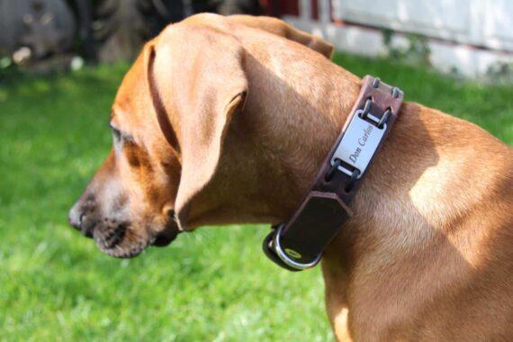 Hundehalsband mit Namen und Telefonnummer