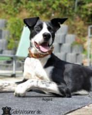 Hundehalsband-Leder-2,5-cm-breit-mit-Kreuz-in-Gelb-Grün-Asgard-1