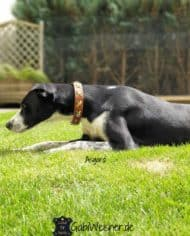 Hundehalsband-Leder-2,5-cm-breit-mit-Kreuz-in-Gelb-Grün-Asgard-2