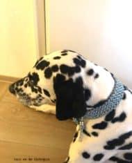 hundehalsband-mit-messingbeschlag-tweed-hellblau-vasco