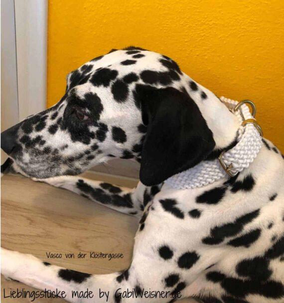 Hundehalsband mit Messingbeschlag, 3 cm breit und stufenlos verstellbar