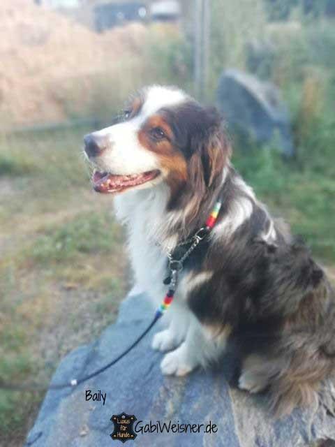 Hundehalsband SET Regenbogen Leder in Schwarz mit Regenbogen