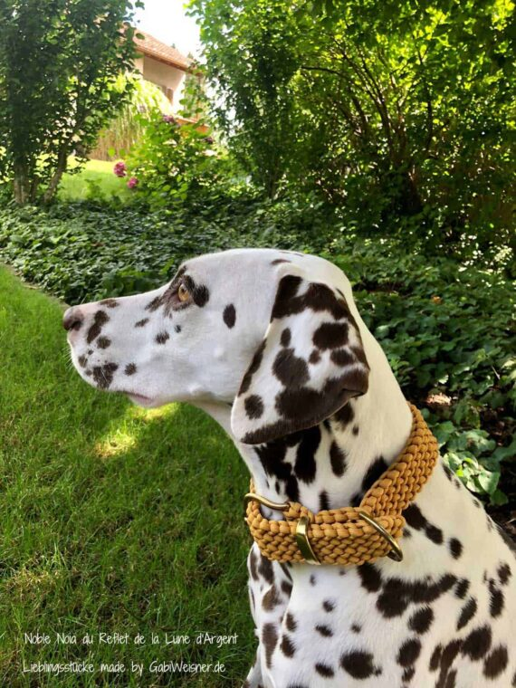 Hundehalsband 3 cm breit in Honigfarben und stufenlos verstellbar. Bestückt mit Beschlag aus Messing oder Edelstahl. Das Halsband wird von uns in Handarbeit aufwendig im Perlmuster 3 cm breit