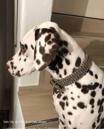 Hundehalsband Dalmatiner Noia