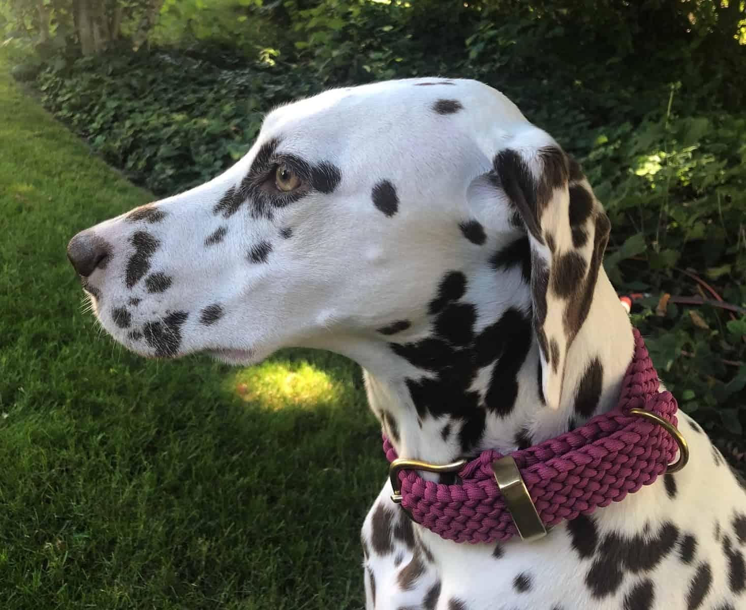 Hundehalsband Paracord Burgundy 3 cm breit stufenlos verstellbar