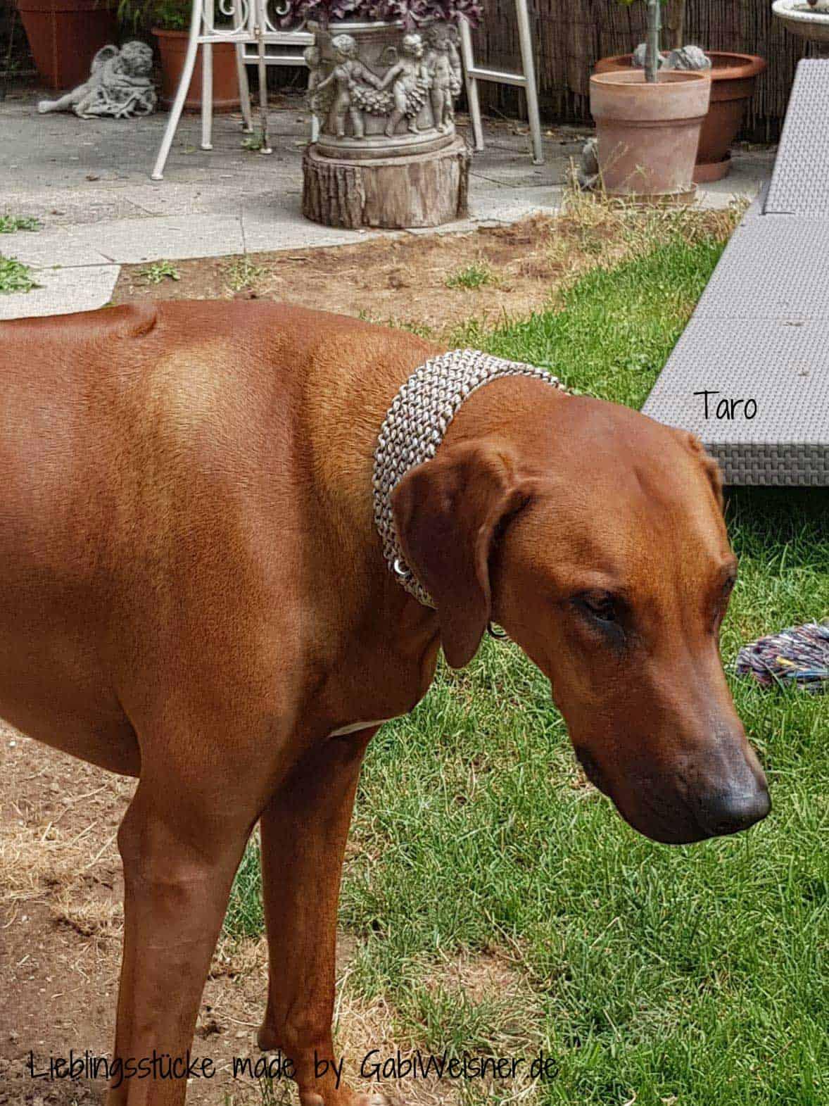 Hundehalsband Paracord 5 cm breit großer Alu-Max® Klickverschluss