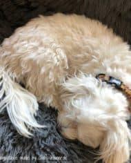 Hundehalsband-mit-Klickverschluss-in-Schwarz-3