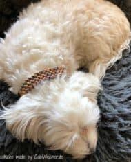 Hundehalsband-mit-Klickverschluss-in-Schwarz-4