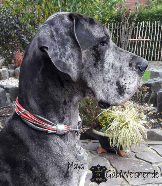Luxus Hundehalsband im Leder Mix für große Hunde