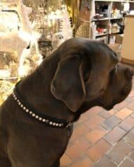 Hundehalsband Swarovski Leder 2