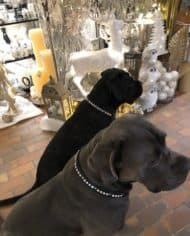 Hundehalsband Swarovski Leder 3