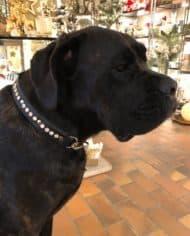 Hundehalsband Swarovski Leder 6