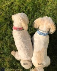 knotenhalsband-rosa-hellblau-malteserhund-Finou-Gizmo-1