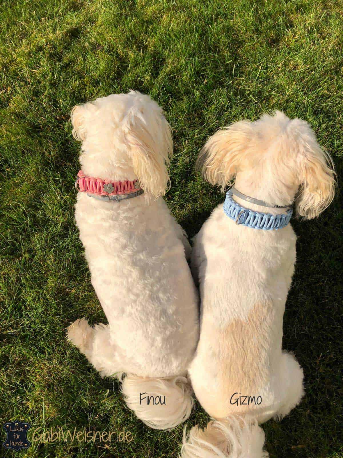 Halsband mit Klickverschluss für kleine Hunde