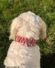 knotenhalsband-rosa-malteserhund-Finou