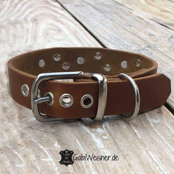 Junghund Halsband zum Mitwachsen