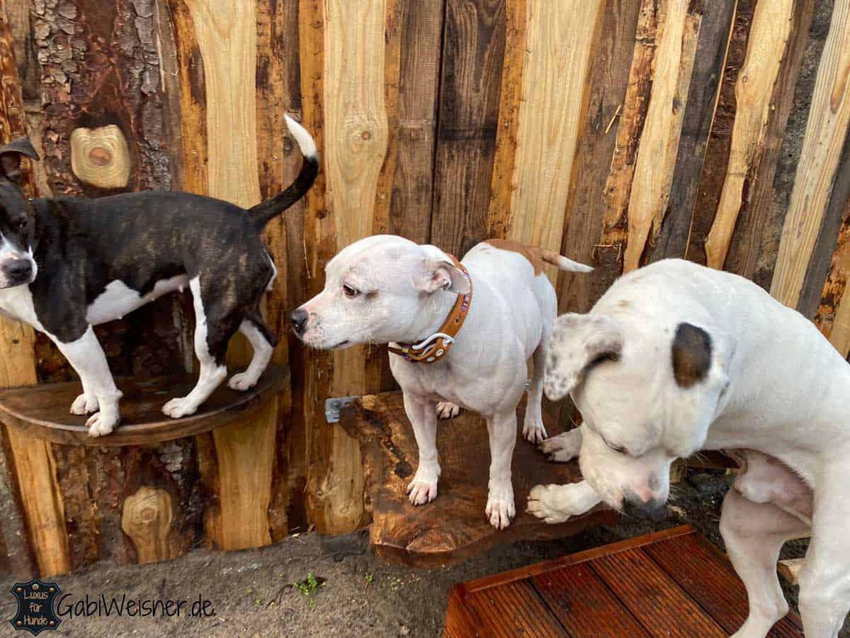 Hundehalsband Hippie Look in Cognac und Rosa
