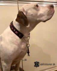 Hundehalsband-im-Ethno-Look-und-dekoriert-mit-Swarovski-Elements-Loki-2