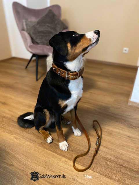 Hundehalsband und Leine Leder 3,5 cm breit