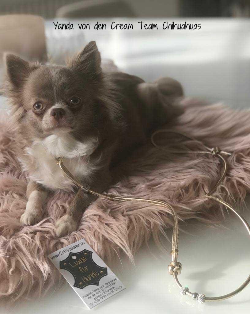 Showleine für kleine Hunde. Nappaleder mit Gold-Glitzer und Strass