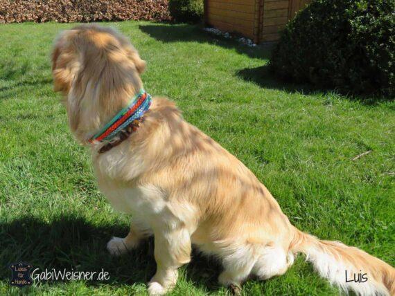 Hundehalsband Hippie Look Leder Mix 6 cm breit