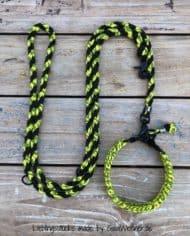 Hundehalsband-SET-in-Schwarz-Gelb-für-mittelgroße-Hunde-2