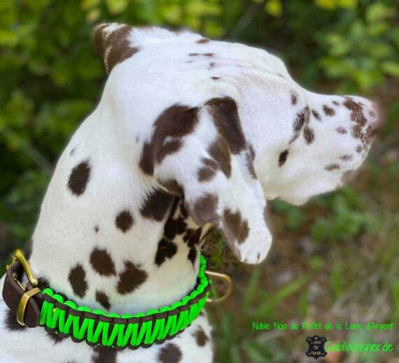 Hundehalsband Neon Leder 3 cm breit verstellbar