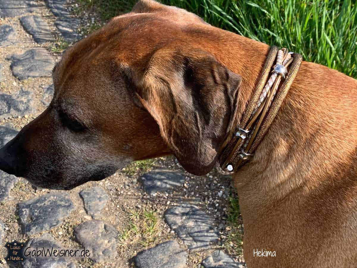 Hundehalsband mit Zugstoppkette. Leder Mix in Gold/Perlmutt