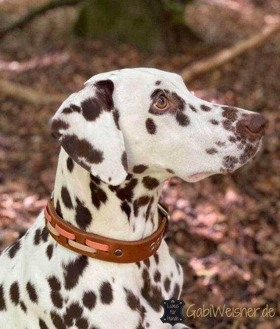 Hundehalsband Leder 3 cm breit und verstellbar. Nappaleder in Salvia oder Apricot