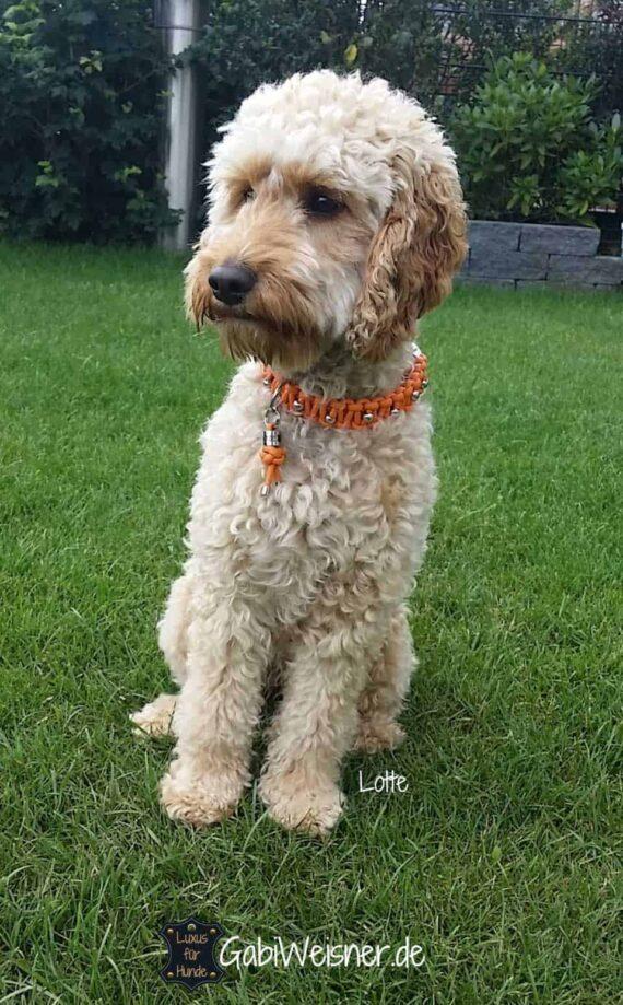 Halsband für kleine Hunde, Edelstahl dekoriert auf Leder in Orange