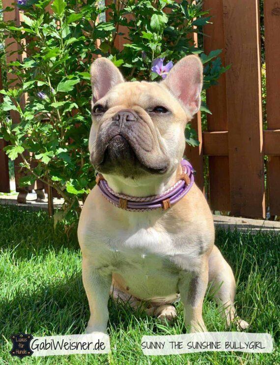 Luxus Hundehalsband