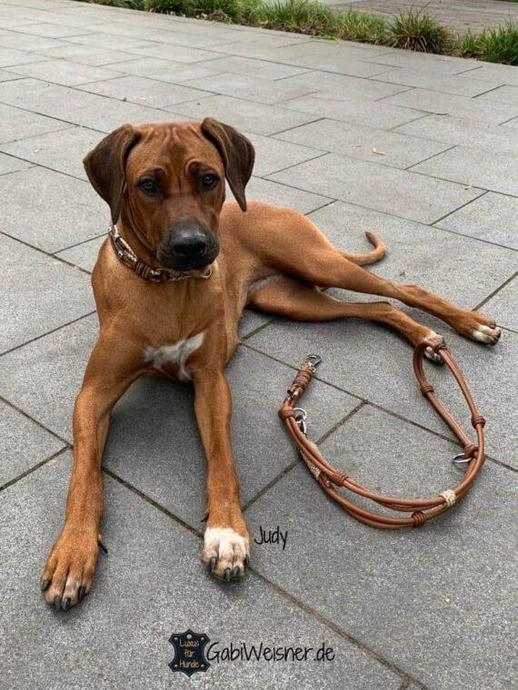 Zugstopp Hundehalsband