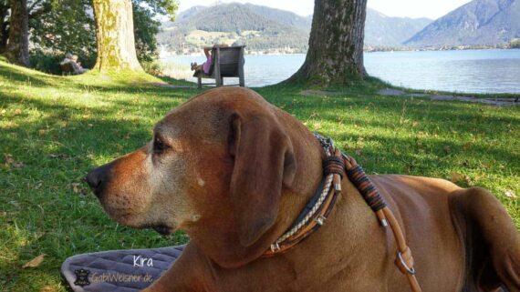 Hundeleine im Doppelstrang Leder je 8 mm für große Hunde Mandelfarben