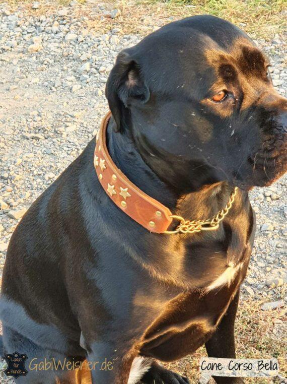 Hundehalsband mit Sternen, Leder 4 cm extra breit. Cane Corso Bella