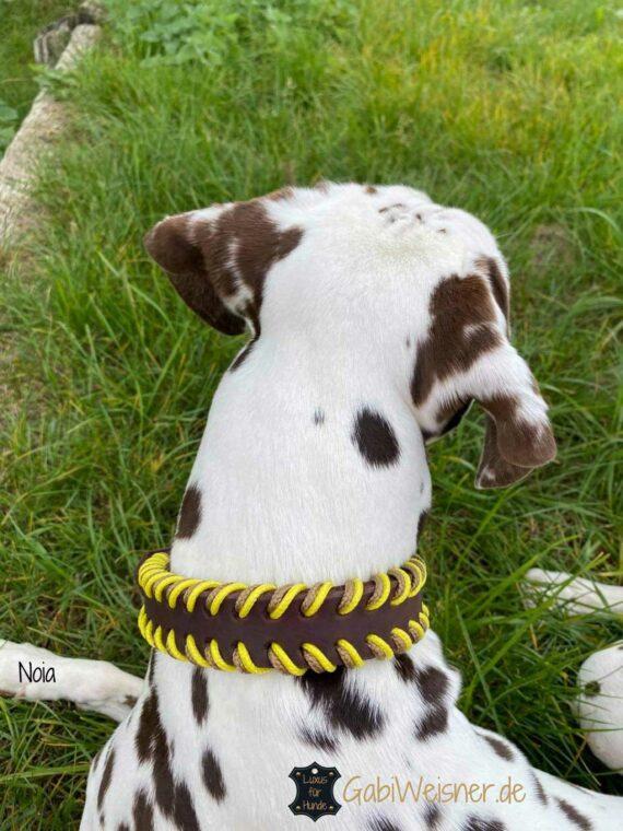 Hundehalsband 25 mm breit Leder doppelt gelegt. Dalmatiner Noia